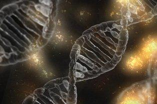 Zespół znikającego płodu a test NIFTY - jak długo utrzymuje się DNA we krwi matki?